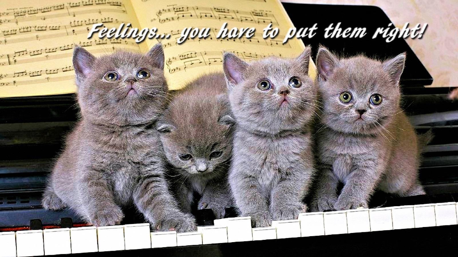 00 kittens 130516