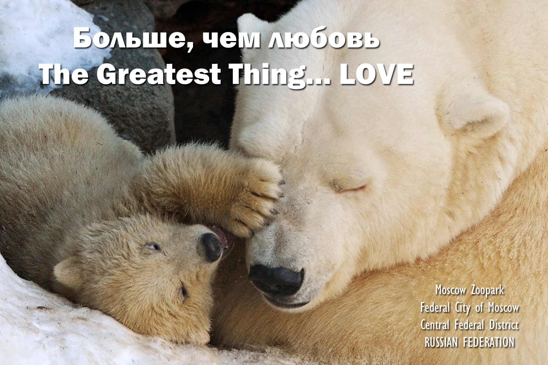 00 Polar Bear cub. Moscow Zoopark. 010516