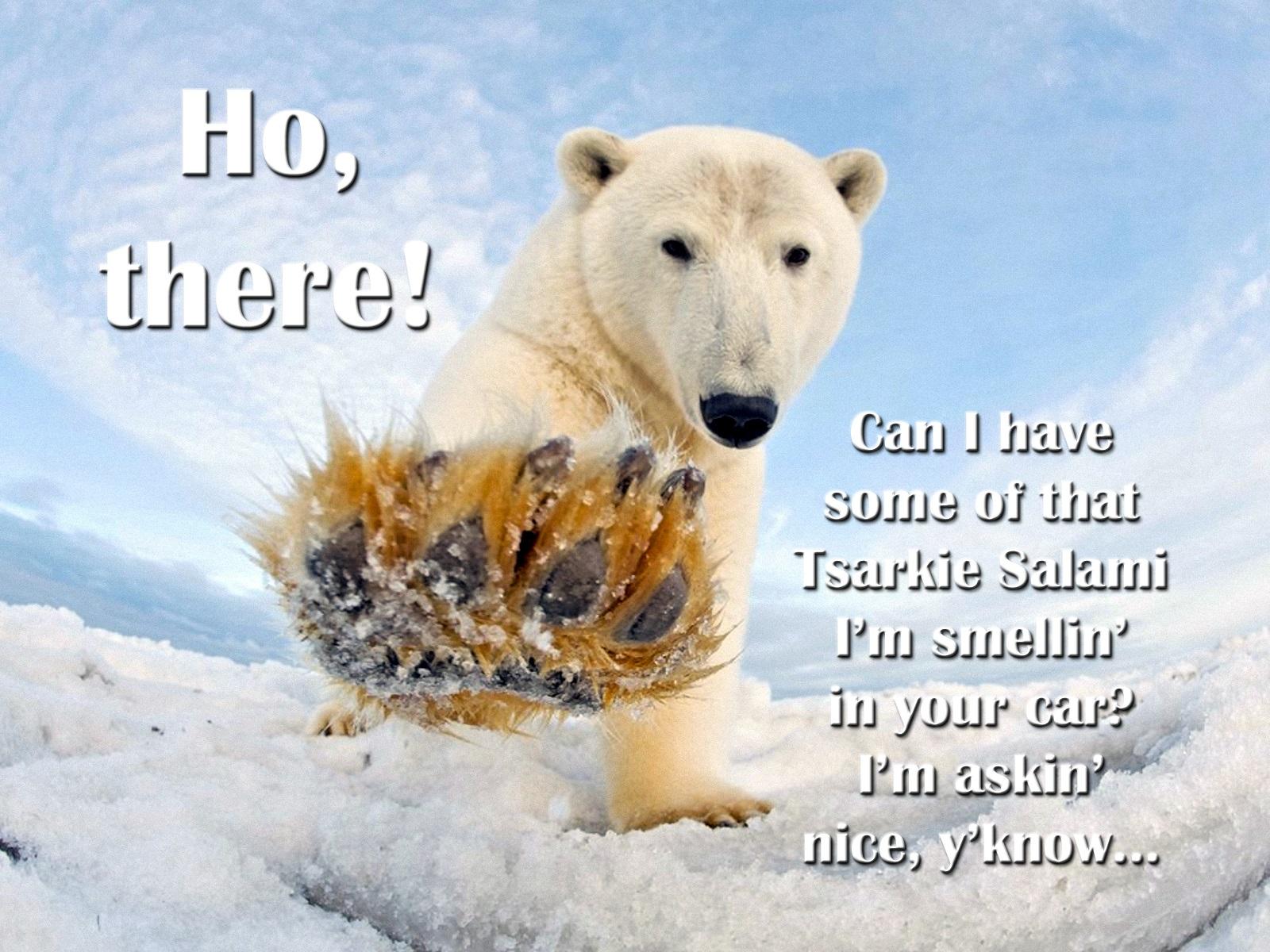 00 polar bear 270616