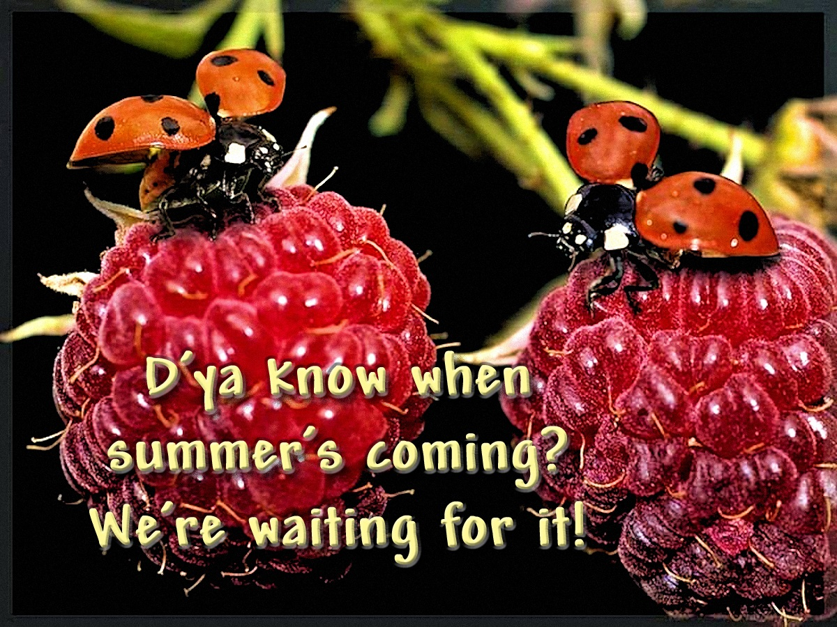 00 SUMMER... We're waiting for it! 220516