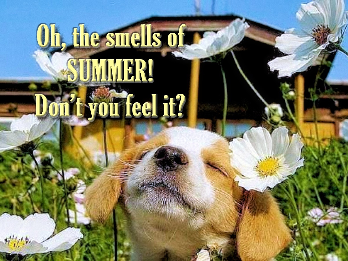 00 the smells of summer. don't you feel it. dog 010616