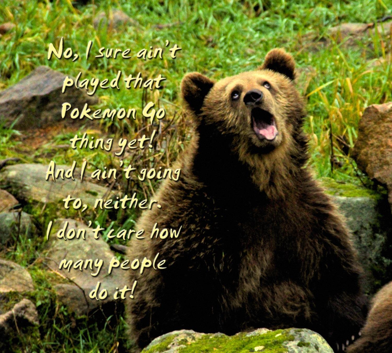 00 bear 160716