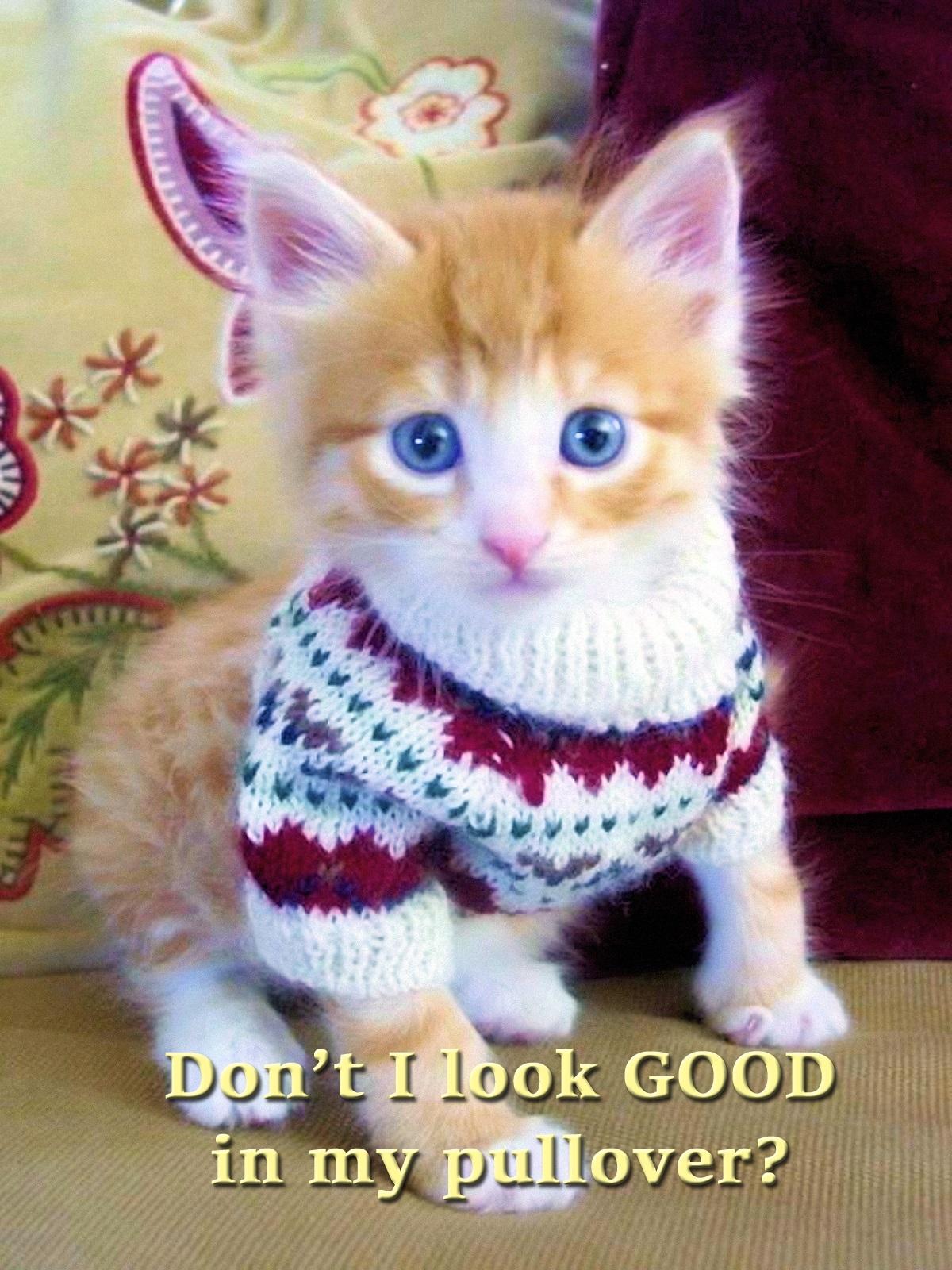 00 cat 310716