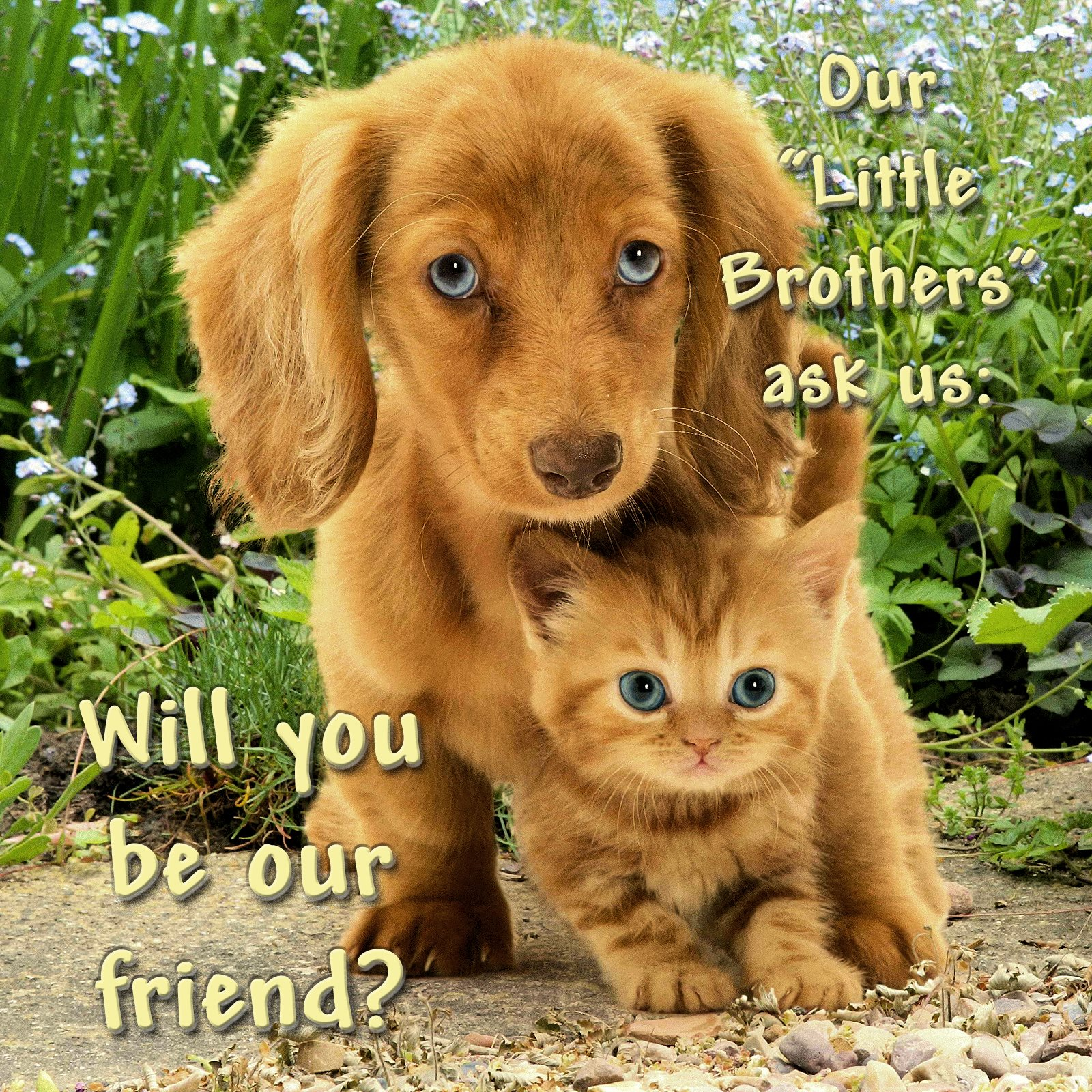 00 dog and cat 020716