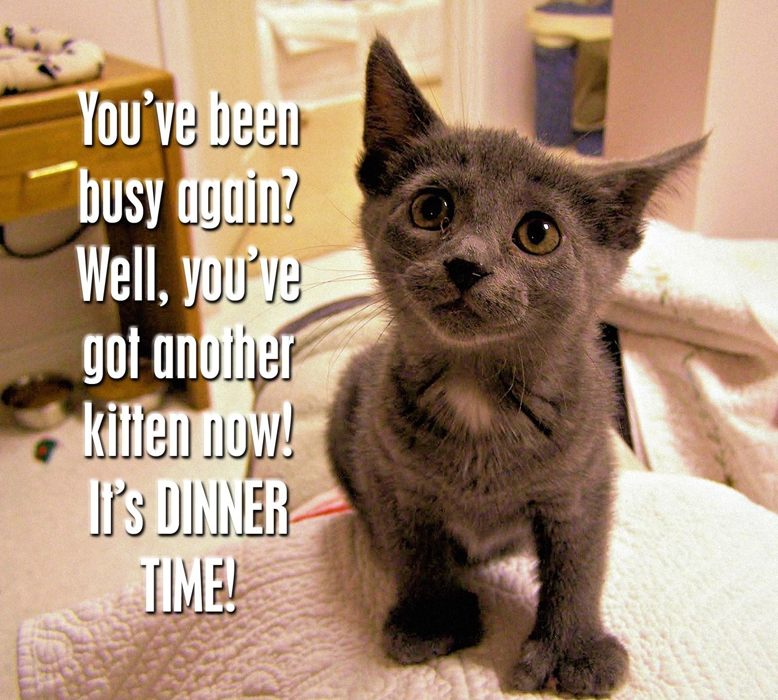 00 kitten 300616