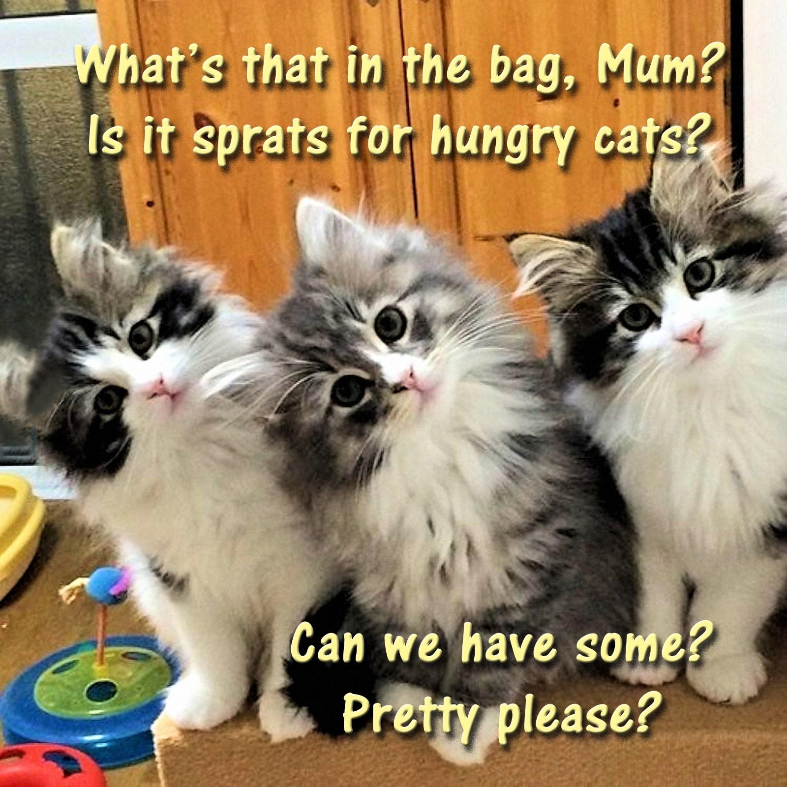 00 kittens 300616