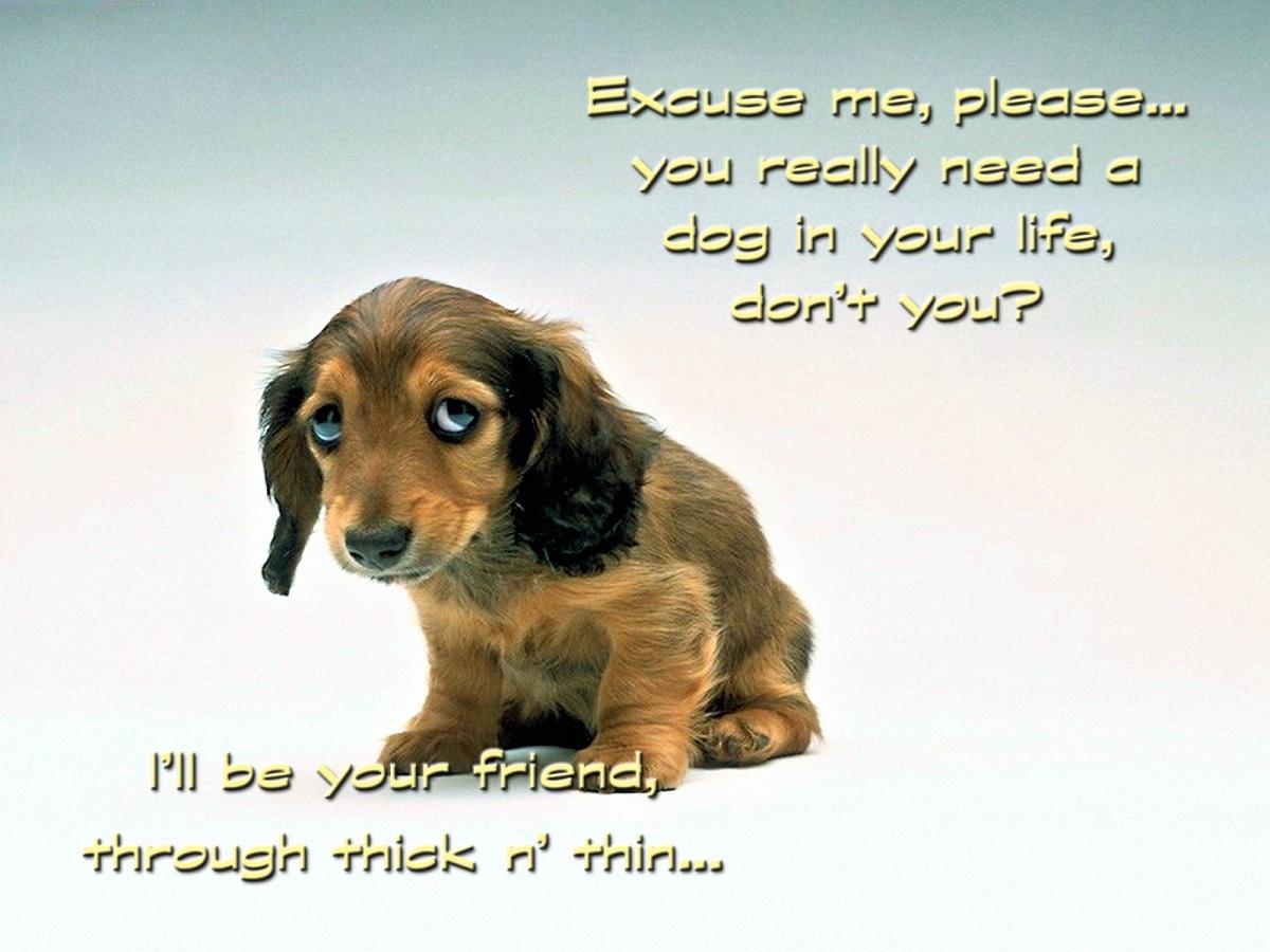 00 sad puppy 300616