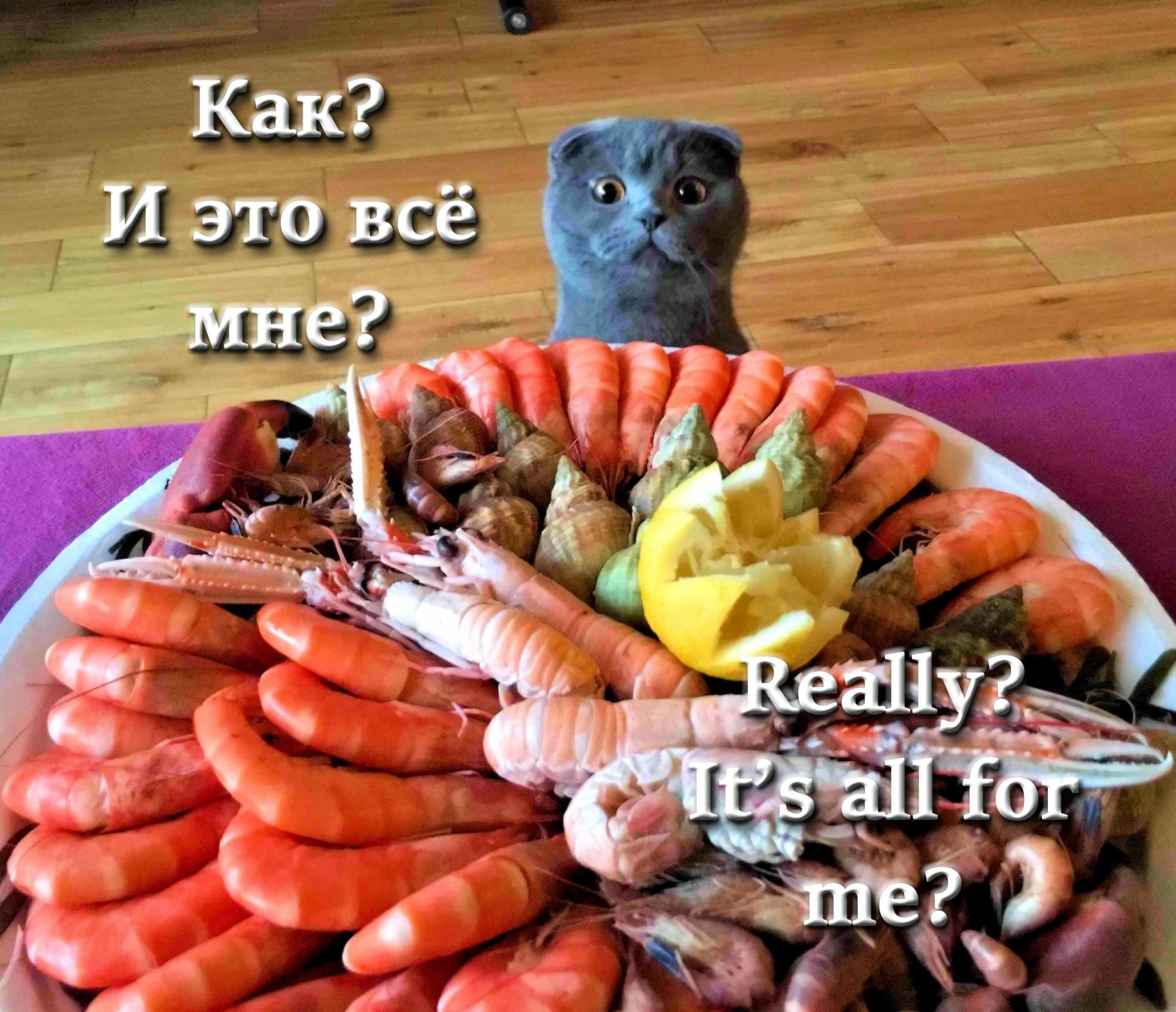 00 cat 010816