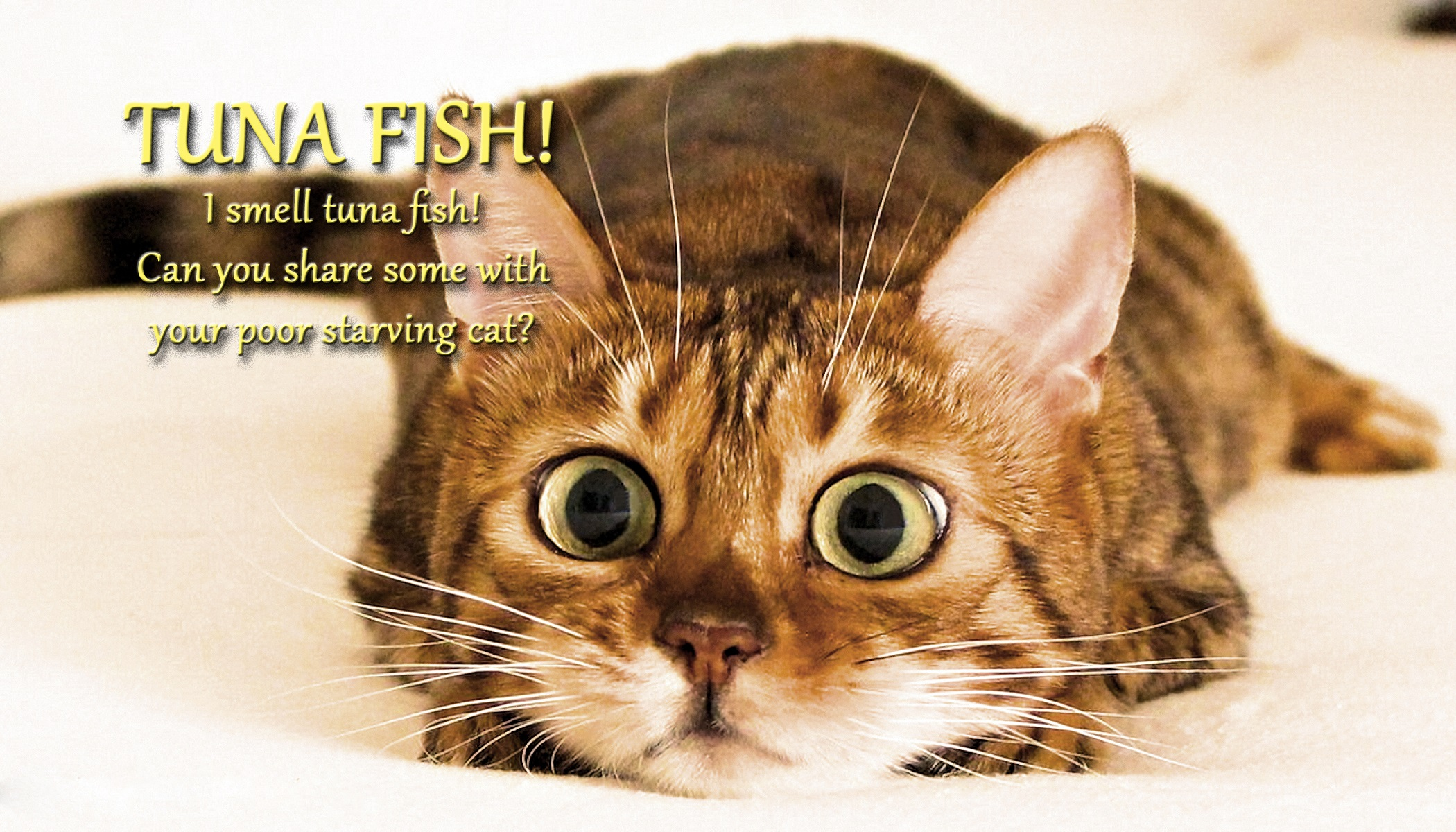 10 august 2016 from the russian web tuna fish voices for Is tuna fish good for cats
