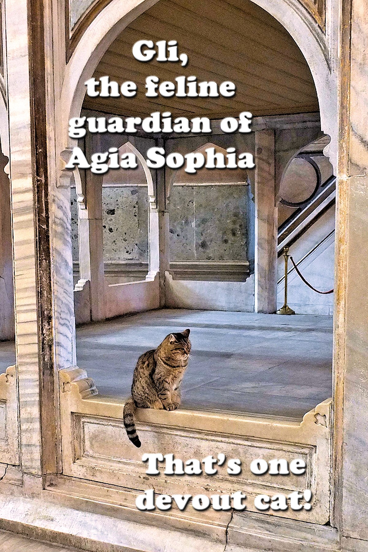 00 cat in agia sophia 210816