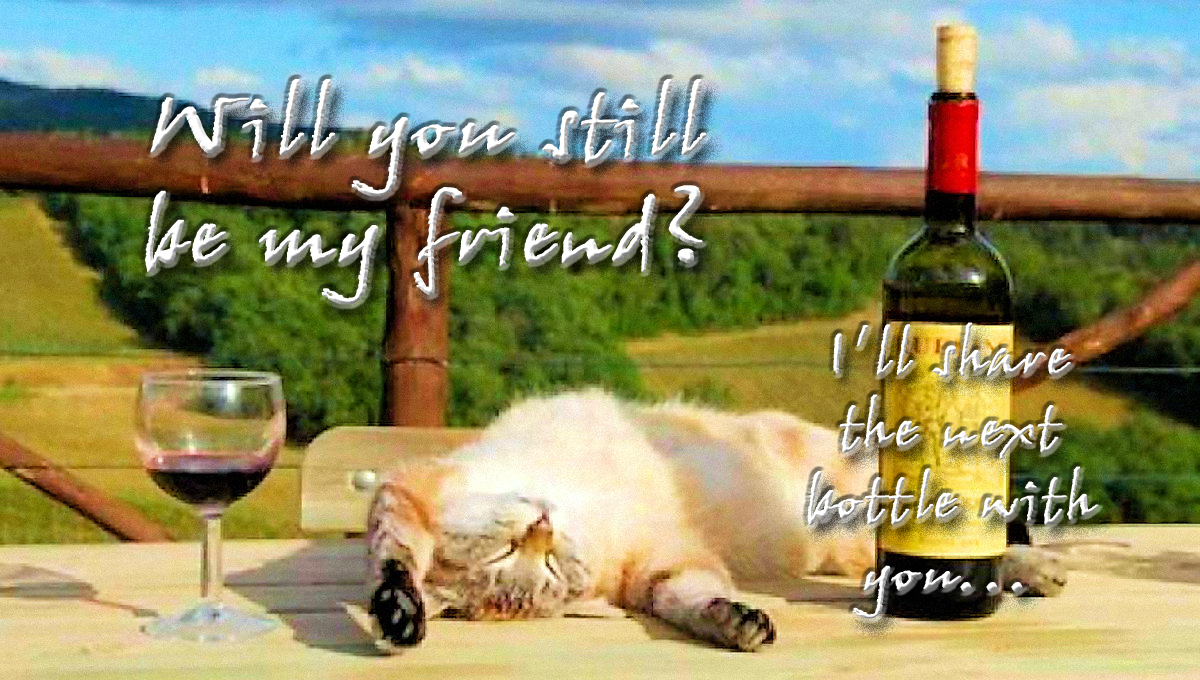 00 drunk cat 300816