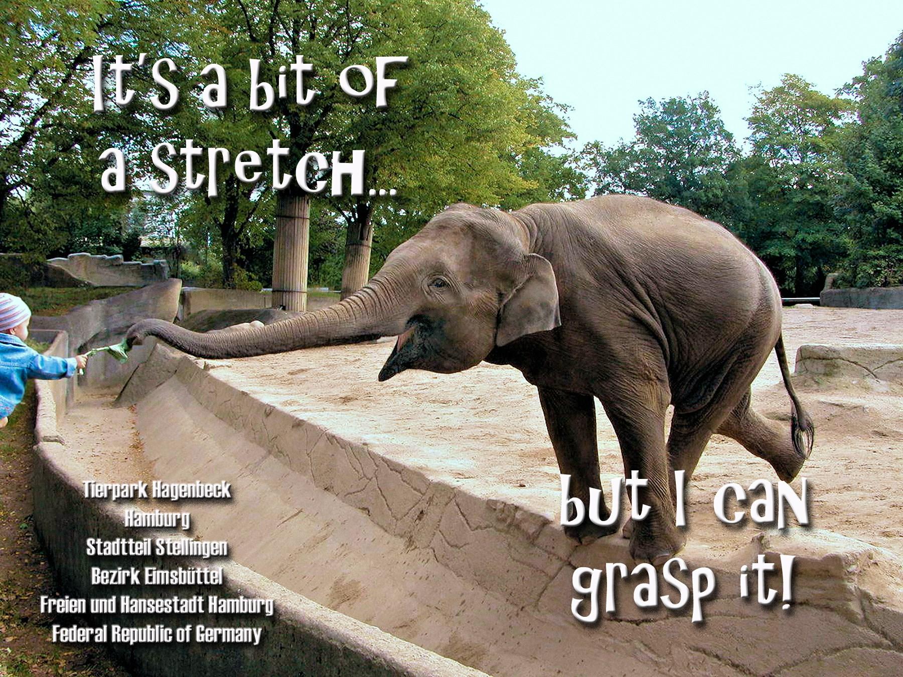00 elephant 060816