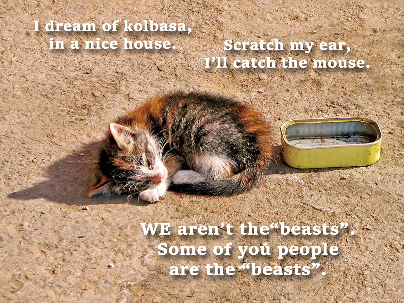 00 kitten 070816