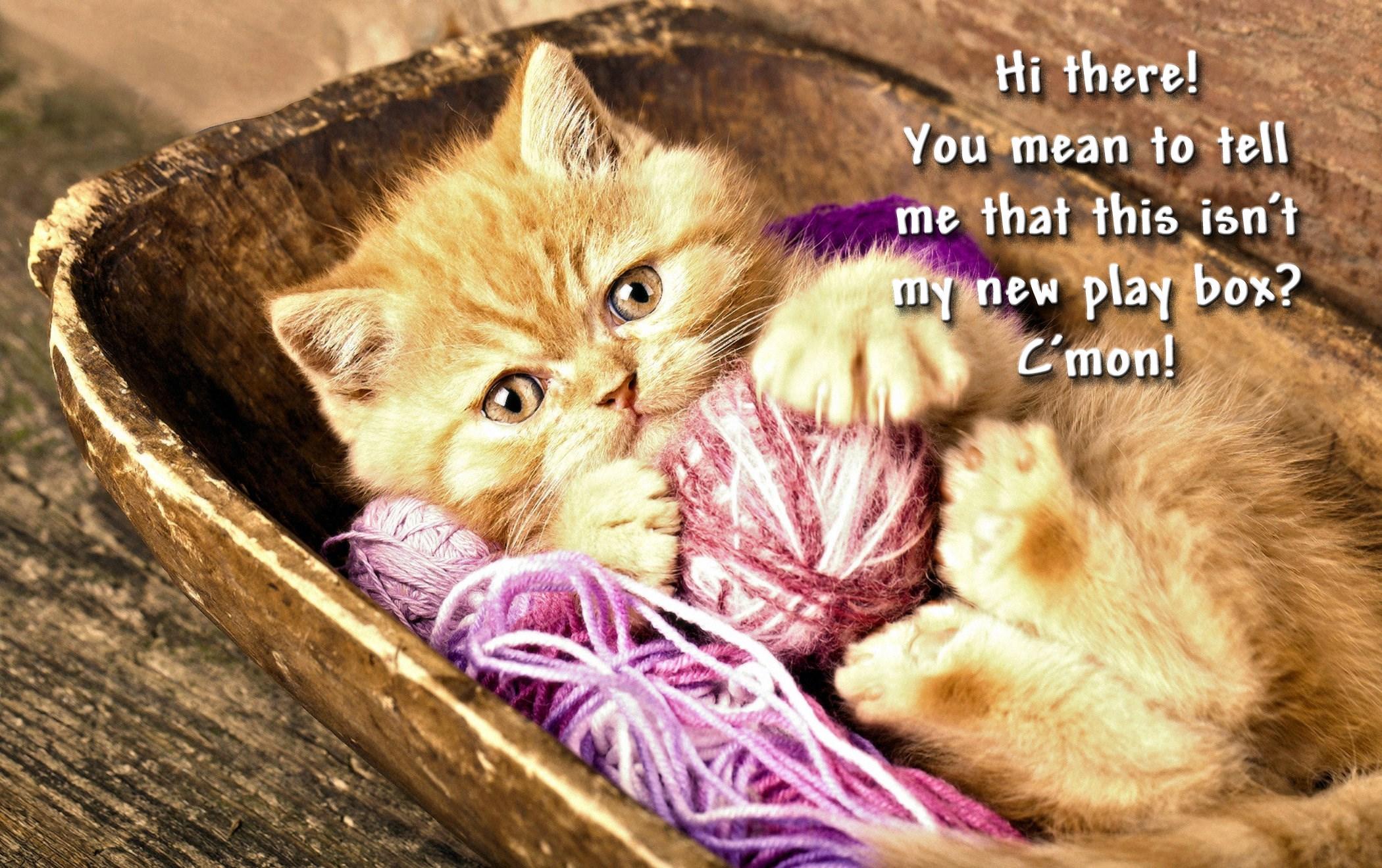 00 cat yarn 030916