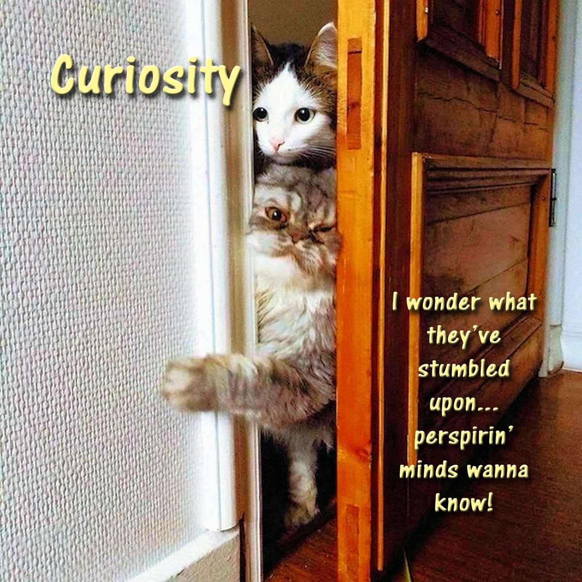 00 cats curiousity 020916