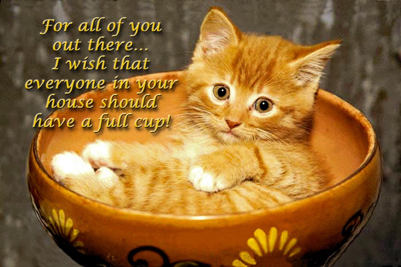 00-cat-in-a-cup-291016