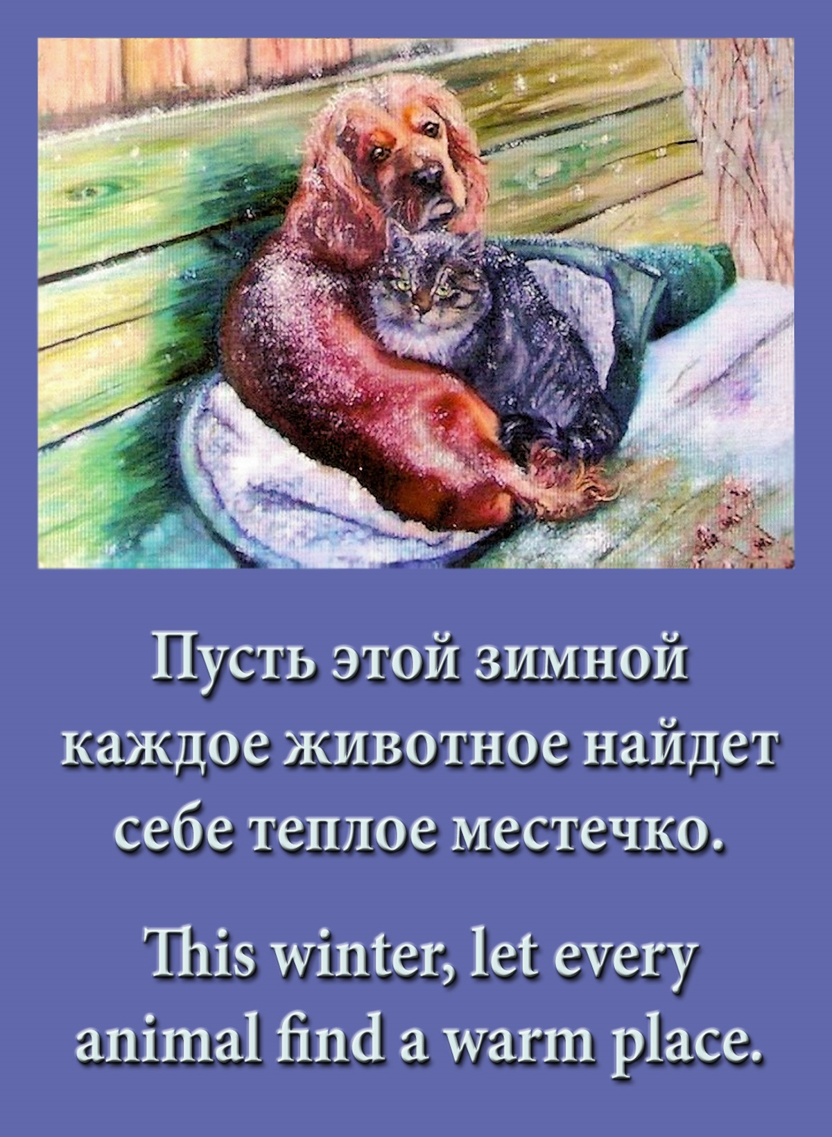 00-cold-cat-and-dog-201116