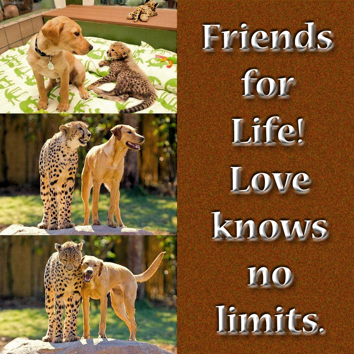 00-dog-and-cheetah-261016
