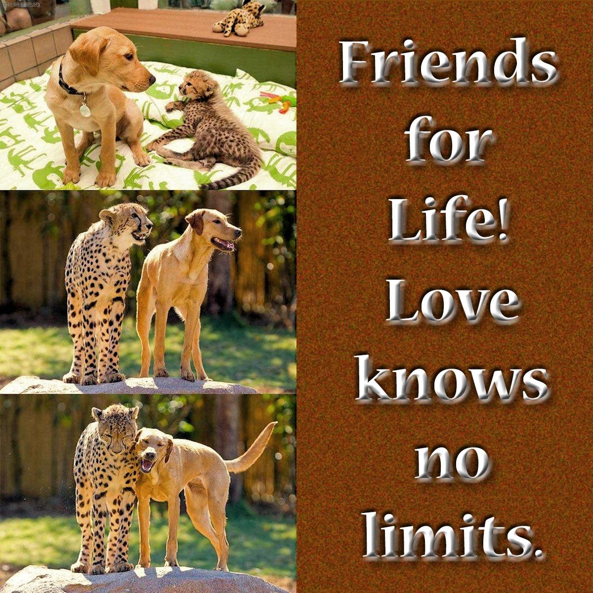 00-dog-and-cheetah-261016
