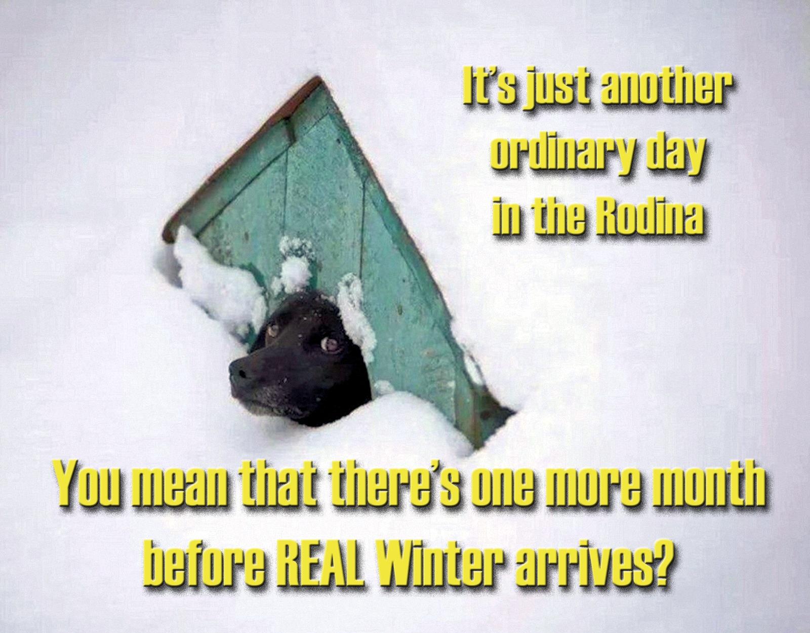 00-dog-winter-russia-221116