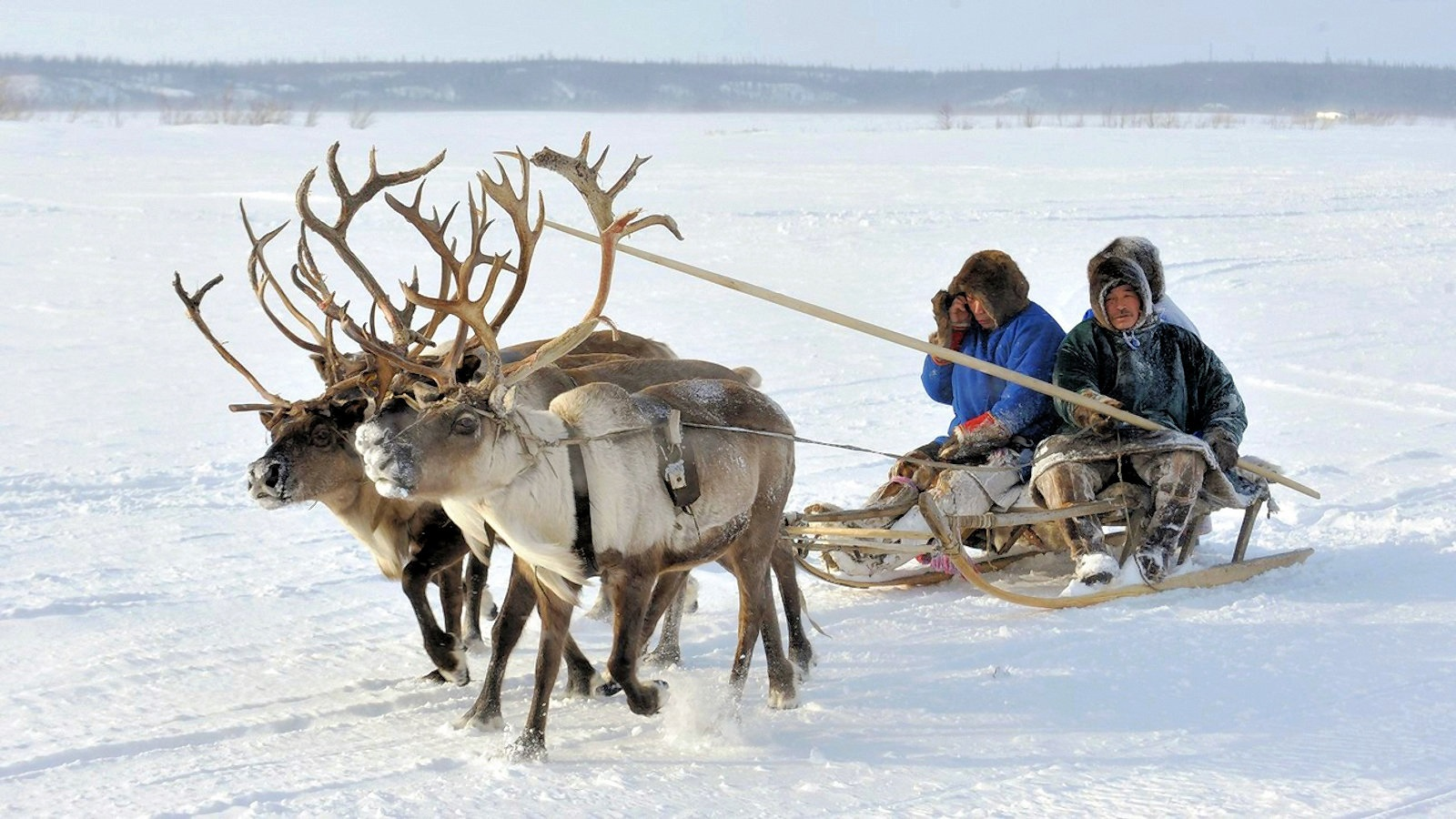 00-russia-reindeer-arctic-171116