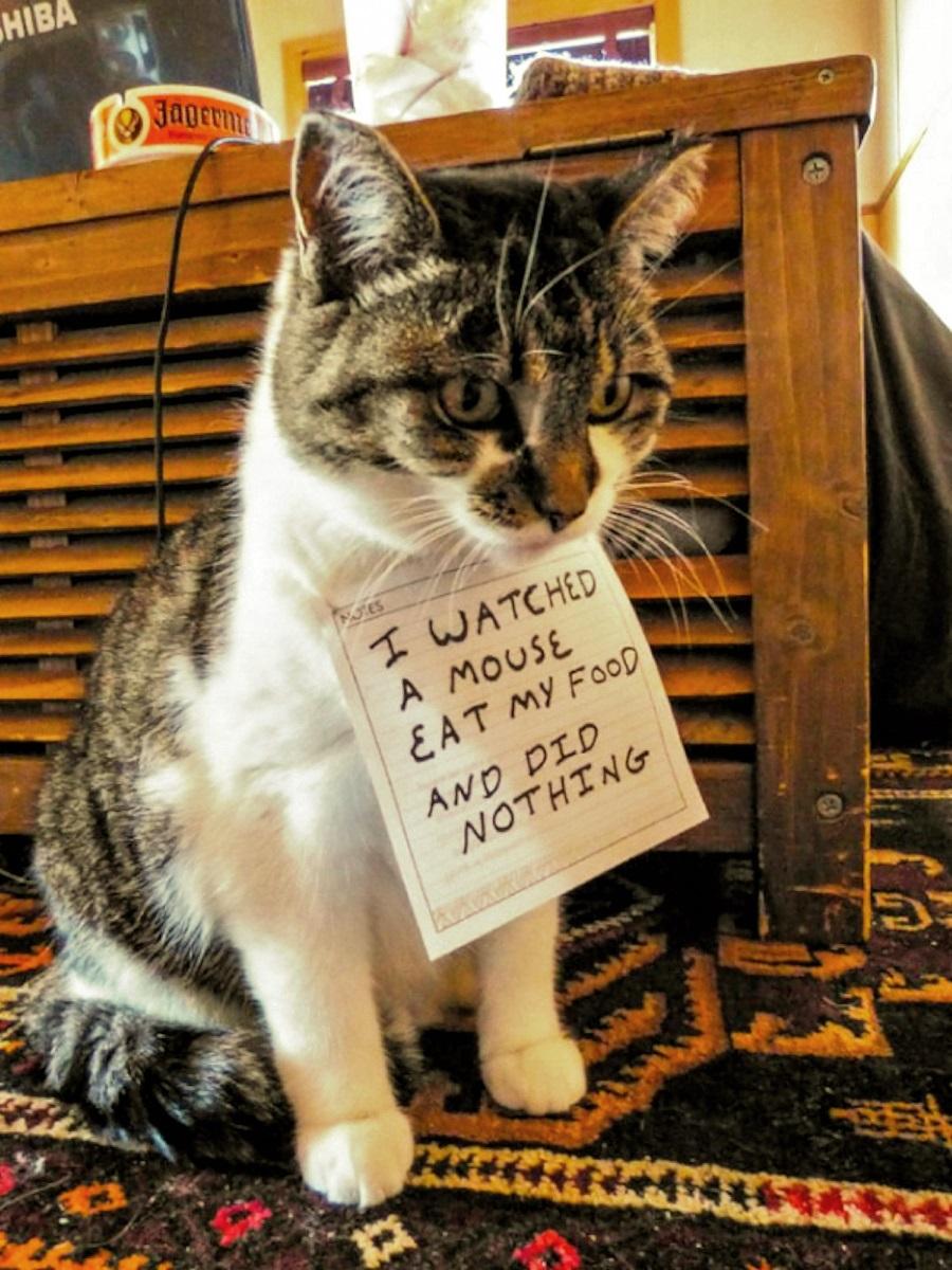 00-bad-cat-250217