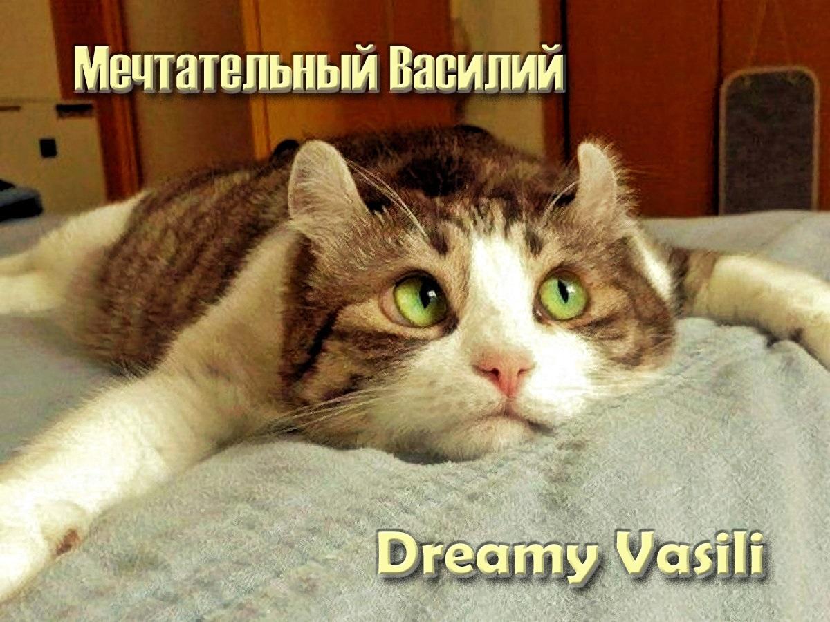 00-cat-050217