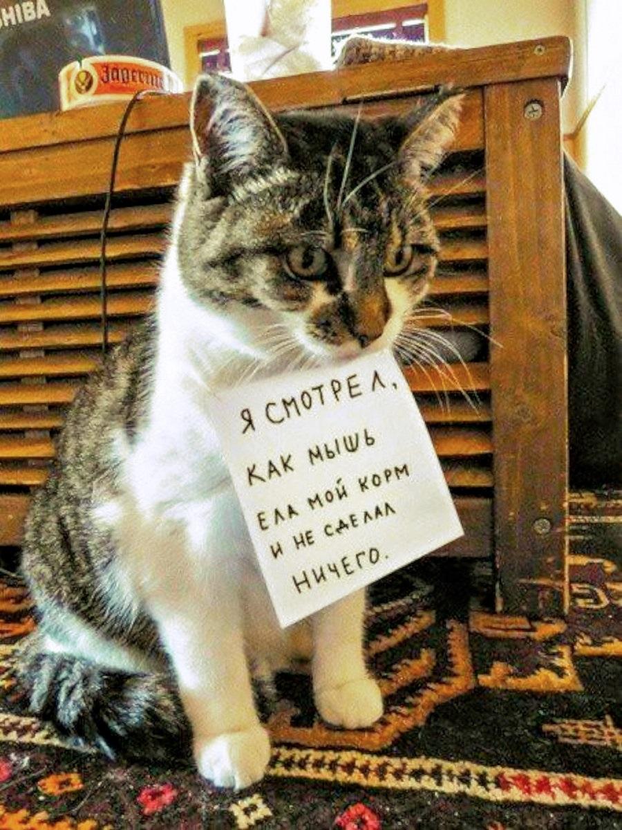 00-cat-250217
