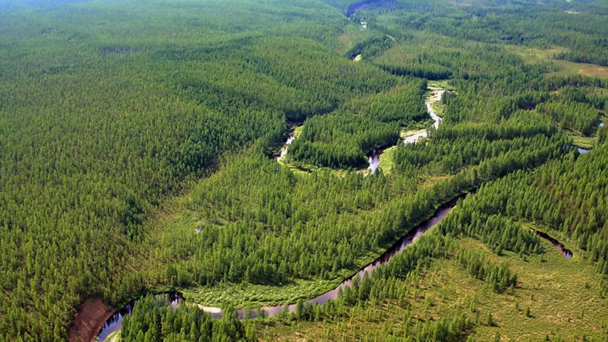 00-russia-tunguska-siberia-forest-050217
